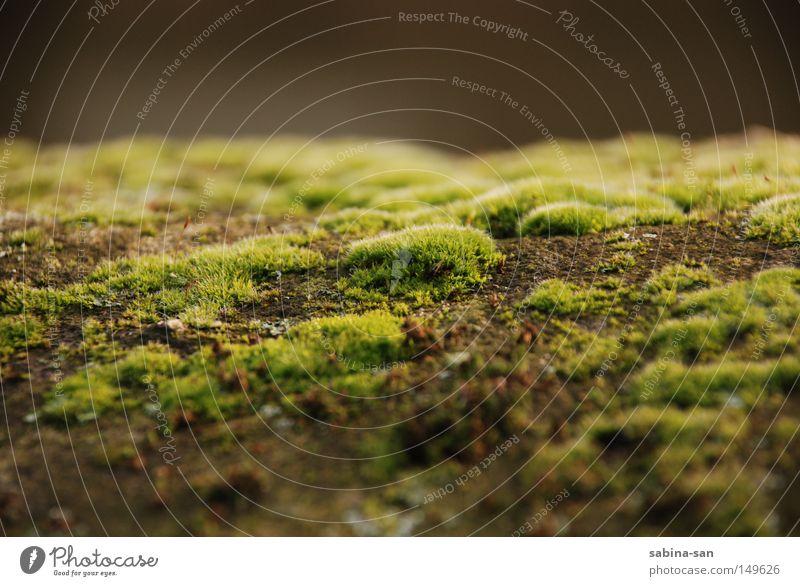 Moostag Natur grün Pflanze Herbst Mauer verfaulen Märchen vermodern