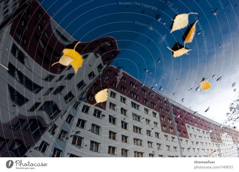 Wohnwaben Wohnung Wohnhochhaus Hochhaus Fenster Himmel Reflexion & Spiegelung KFZ Motorhaube Plattenbau Osten Poliermittel Blatt Knick Herbst Berlin