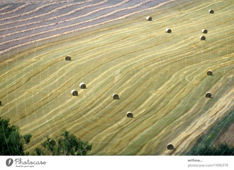 ballungsgebiet ruhig Herbst Feld Landwirtschaft Ernte Biologische Landwirtschaft Kornfeld sommerlich Landleben Getreidefeld Strohballen Heuballen Fußballen