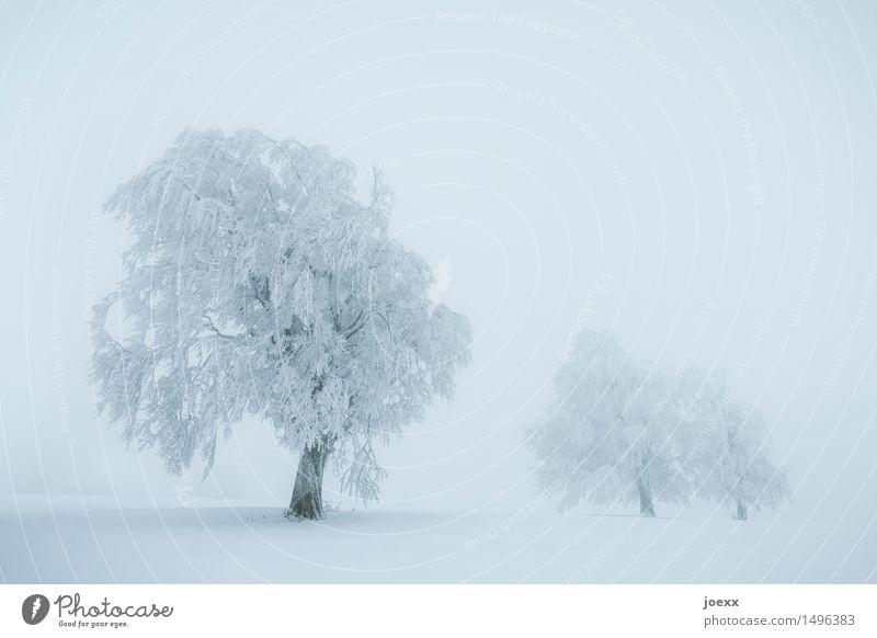 Geh! Landschaft Winter schlechtes Wetter Nebel Schnee Schneefall Baum kalt blau weiß schneebedeckt Farbfoto Gedeckte Farben Außenaufnahme Menschenleer