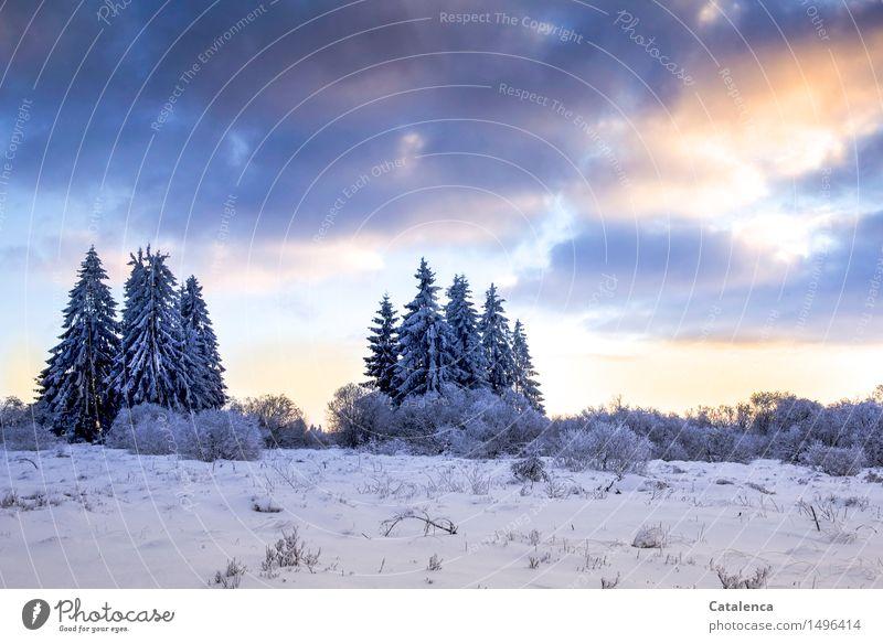 Tanneninseln Himmel Natur Ferien & Urlaub & Reisen Pflanze Baum Landschaft Wolken Winter Schnee Gras Freiheit Park Luft Eis Erde wandern