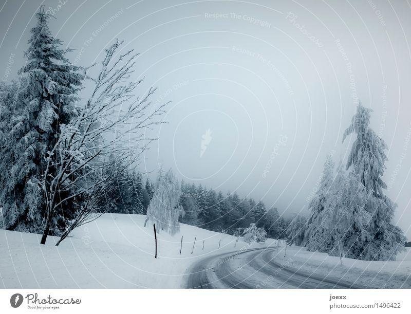 Langsam Natur Himmel Winter schlechtes Wetter Nebel Schnee Wald Straße kalt blau schwarz weiß bedrohlich Glätte Farbfoto Gedeckte Farben Außenaufnahme