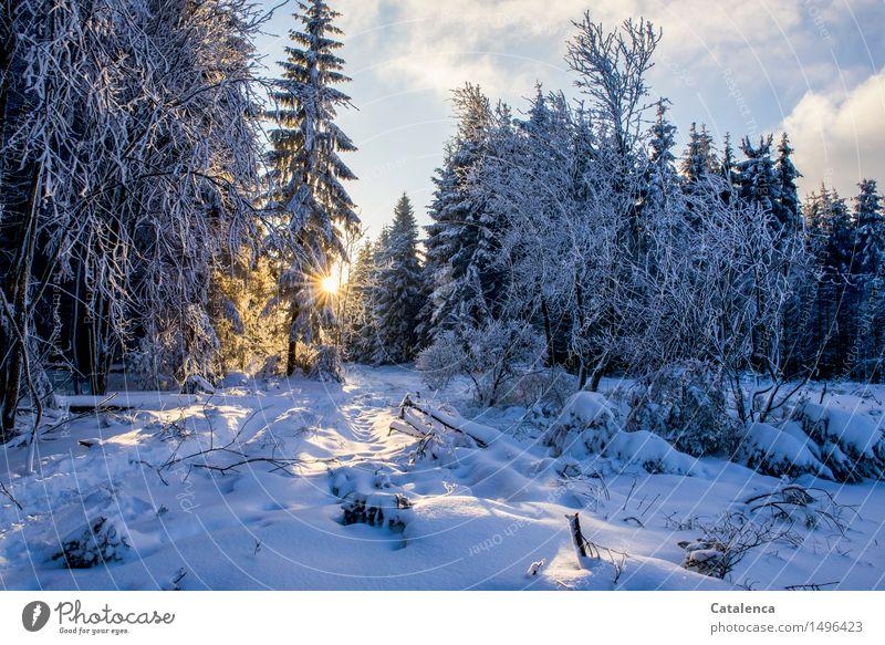 Unterwegs Ausflug Winter Schnee wandern Schneeschuhlaufen Natur Landschaft Pflanze Himmel Wolken Sonne Sonnenlicht Eis Frost Baum Fichten Tanne Laubbaum Wald