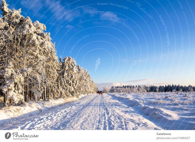 Vereistes Venn Natur Ferien & Urlaub & Reisen Pflanze blau weiß Landschaft Freude Winter Wald Schnee Gesundheit Familie & Verwandtschaft Lifestyle grau Menschengruppe maskulin