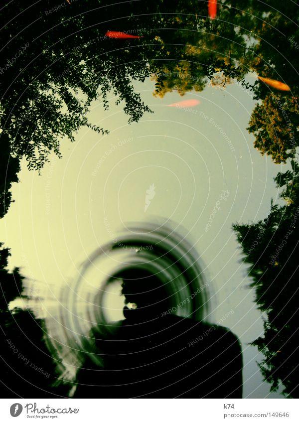 Goldfischteich Wasser Reflexion & Spiegelung Baum Blatt grün orange See Teich Gewässer Bild Bilderrahmen Rahmen Koi Wassertropfen Tropfen eingerahmt
