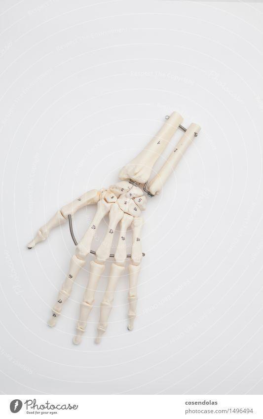 Hand lernen Studium Beratung Arzt Skelett Nachbildung Chirurgie