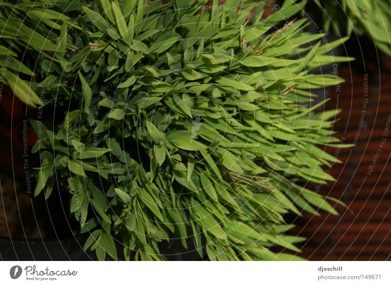 Grass-geflüster Natur grün Leben Garten Feld ökologisch harmonisch Gärtner Blumenhändler Händler