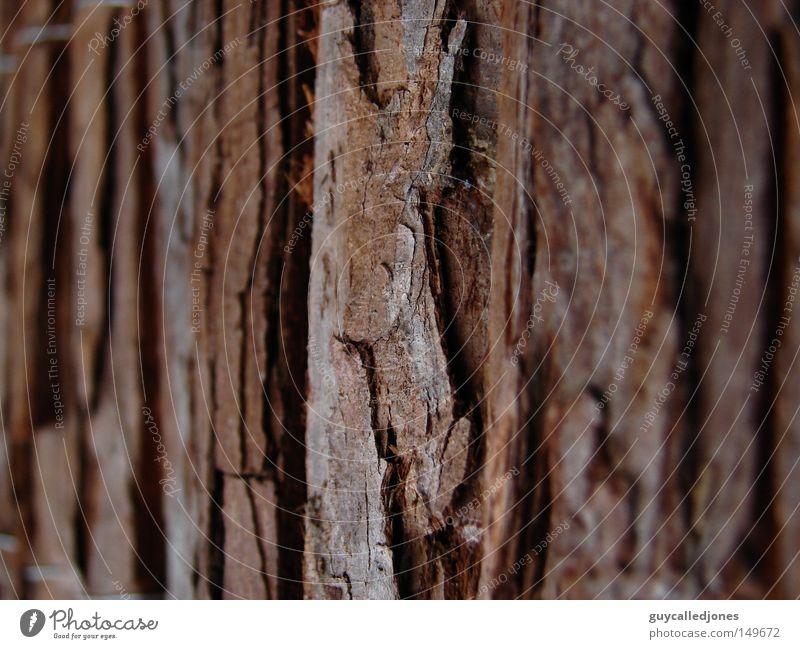 Rinde Sommer Natur Baumrinde Baumstamm Oberfläche Tiefenschärfe Außenaufnahme Detailaufnahme Strukturen & Formen Baumstruktur Textfreiraum rechts