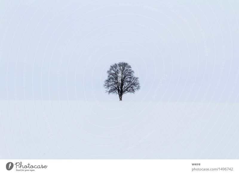 Winter Natur Pflanze Baum Landschaft Einsamkeit Blatt kalt Schneefall einzeln Ast Landwirtschaft Zweig Umweltschutz Forstwirtschaft Schneeflocke