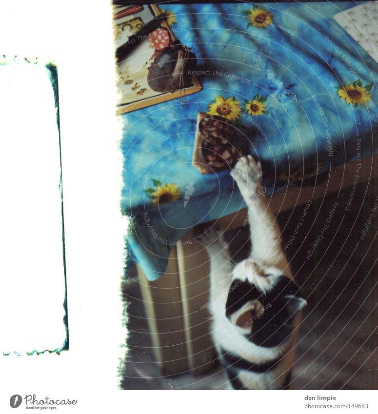 fastfood Katze Tier Mitesser Wurstwaren Blutdurst Appetit & Hunger Ernährung Abendessen Vesper Futter Tisch Küche alt Fehler Mittelformat Rollfilm analog