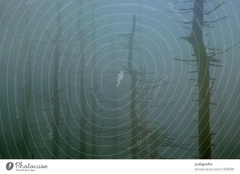 Dämmerung senkte sich von oben Natur Baum Winter Farbe Wald kalt Herbst Berge u. Gebirge wandern Nebel Wetter Umwelt mystisch Dunst November Harz