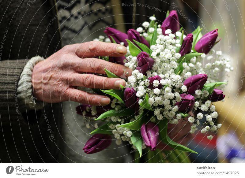 Frühlingsstrauss Mensch Mann Pflanze Hand Blume Blatt Erwachsene Leben Blüte Senior Arbeit & Erwerbstätigkeit maskulin Geburtstag Arme 45-60 Jahre 60 und älter