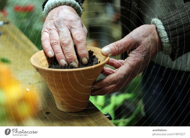 En paar Blome flanze Arbeit & Erwerbstätigkeit Beruf Gartenarbeit Floristik Blumenhändler Mensch maskulin Männlicher Senior Mann Leben Arme Hand Finger 1