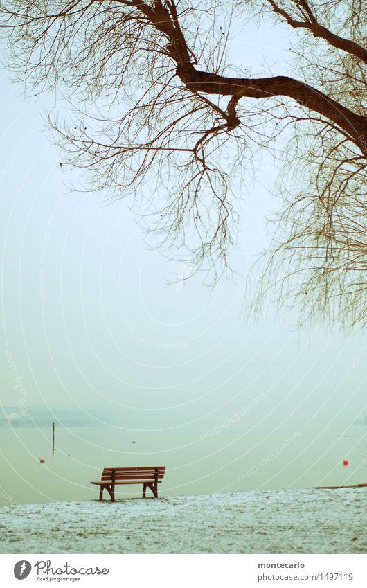 erste reihe Landschaft Pflanze Erde Luft Wasser Himmel Horizont Winter Klima Schönes Wetter Nebel Schnee Baum Gras Wiese Seeufer Bodensee Holzbank Zeichen
