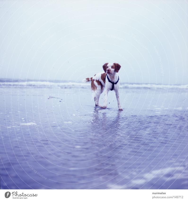Hund am Strand. Wasser Ferien & Urlaub & Reisen schön Meer Einsamkeit Tier Küste Sand Tierjunges Horizont Deutschland gehen Wellen Reisefotografie