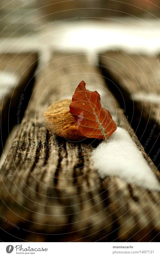 knapp daneben | winter Umwelt Natur Winter Klima schlechtes Wetter Schnee Pflanze Blatt Grünpflanze Wildpflanze Steg Stein Holz alt dunkel dünn einfach kalt nah