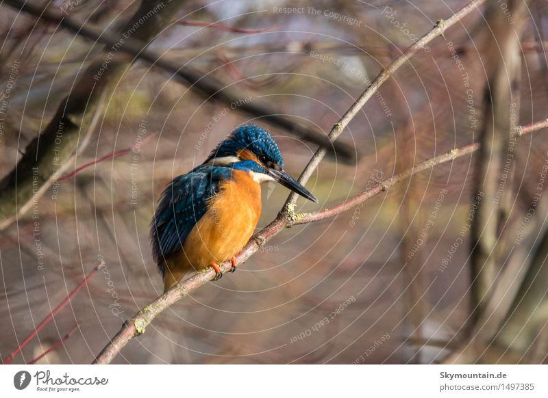 Wo sind die Fische? Umwelt Natur Landschaft Pflanze Tier Frühling Winter Klima Wetter Schönes Wetter Baum Seeufer Flussufer Moor Sumpf Teich Bach Wildtier Vogel