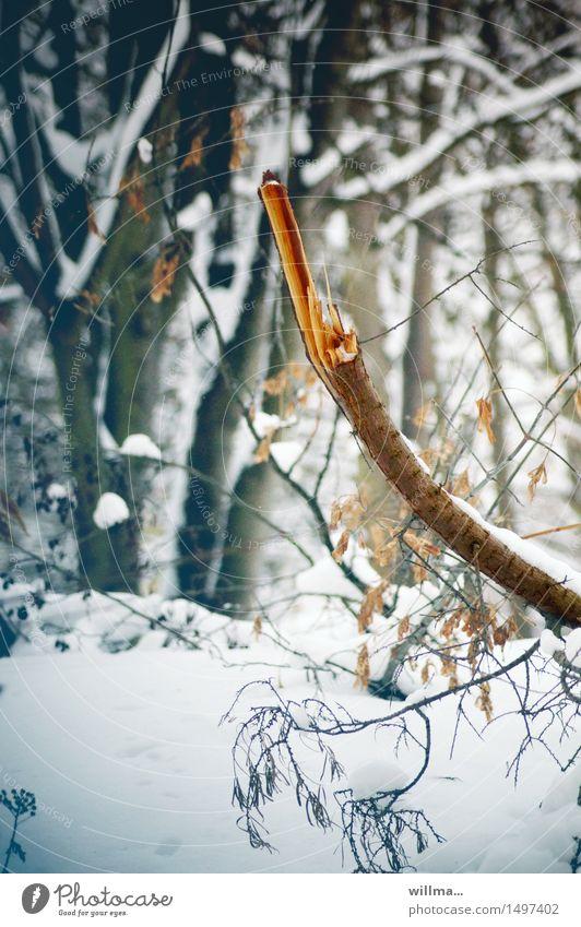 Stielbruch Ast Stock kaputt zerbrochen gebrochen Totholz Bruch Winter Schnee Wald kalt Bruchstück Waldspaziergang Naturwuchs