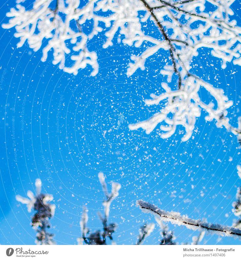 Schneefall Winter Winterurlaub Natur Himmel Wolkenloser Himmel Sonnenlicht Klima Wetter Eis Frost Baum Erholung Blick ästhetisch frisch kalt natürlich blau weiß