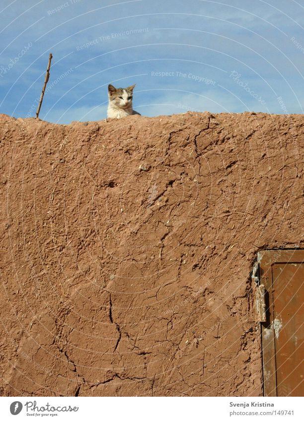 Auf der Mauer, auf der Lauer... Lehm Katze Katzenbaby Himmel Schönes Wetter niedlich süß Sommer Marokko Wärme gemütlich Erholung Riss Haustier Tier weich