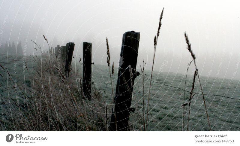 perspektive ego Himmel Winter Wolken Wiese Holz grau Landschaft Nebel Getreide Weide