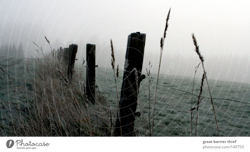 perspektive ego Nebel Holz Himmel Wiese Wolken grau Landschaft Winter Getreide Weide