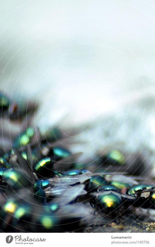 Schwirrgeschwader Metall glänzend Fliege fliegen mehrere Insekt viele Flugzeuglandung krabbeln Haufen Schwarm Summen Schmeißfliege wimmeln Anzahl & Menge
