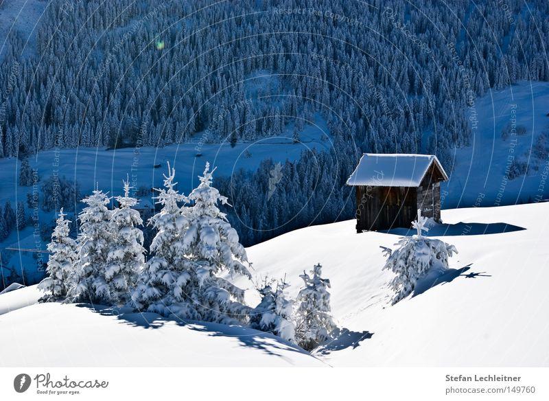 Der erste Schnee - Juche! Natur Baum Landschaft Winter Berge u. Gebirge Park Idylle Show Dorf Österreich Schneelandschaft unberührt Bundesland Tirol Haus