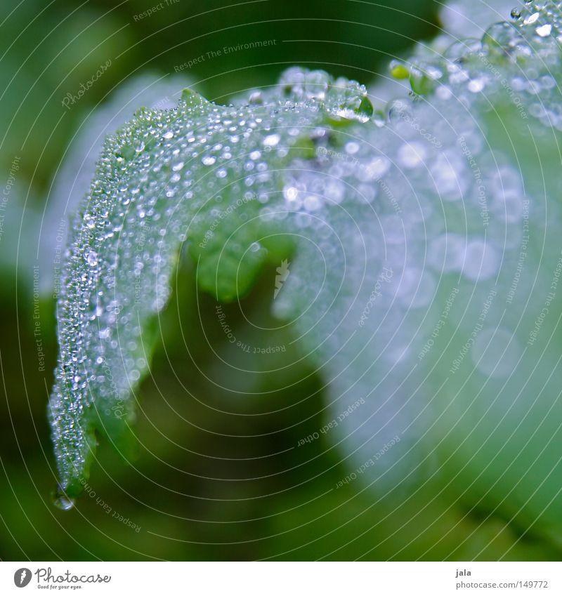 glitzerwald Pflanze schön Wasser Blatt Leben Herbst Regen glänzend Wassertropfen nass Romantik Tropfen harmonisch Gewitter feucht Durst
