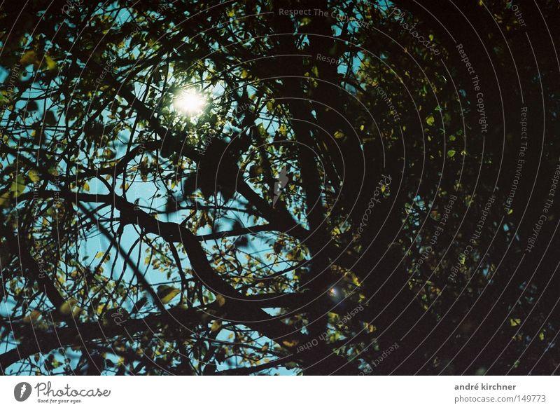23:34 uhr Wald Baum Mond Blatt Ast geschlossen Himmel dunkel Herbst Langzeitbelichtung