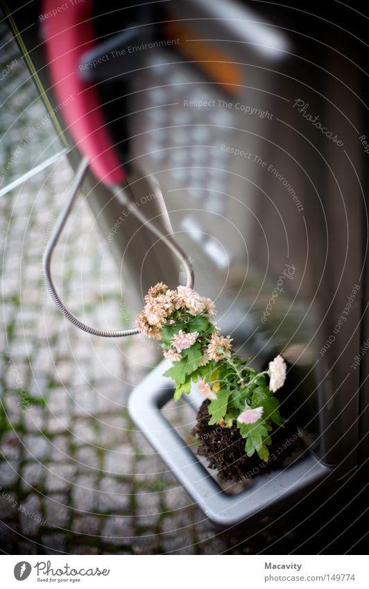 Die neue Telekom Farbfoto Außenaufnahme Schwache Tiefenschärfe Telekommunikation Callcenter Telefon Kabel Pflanze Blume Topfpflanze Kleinstadt Metall Blühend