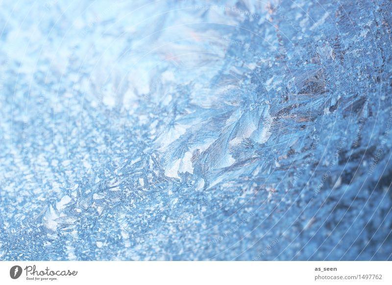 Eisblumen Weihnachten & Advent blau schön Farbe weiß Winter kalt Schnee Stil Stimmung hell Design glänzend Wetter Eis leuchten