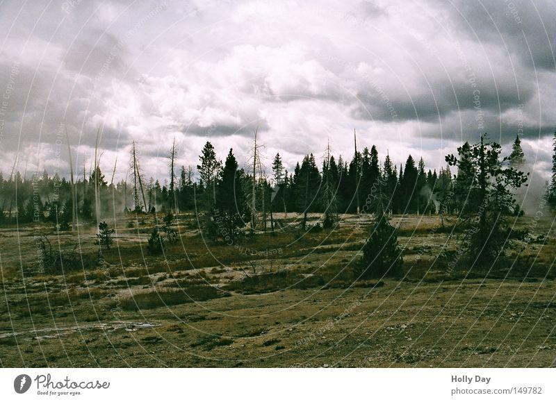 Mondlandschaft im Yellowstone Yellowstone Nationalpark USA dunkel Trauer Wasserdampf Rauch Wolken Strukturen & Formen Baum Tod braun Gegenlicht Himmel Tanne