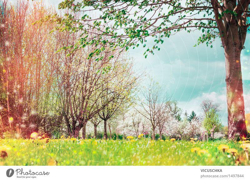 Frühling Natur. Hintergrund mit Garten oder Park Lifestyle Design Sommer Landschaft Pflanze Himmel Sonnenlicht Schönes Wetter Baum Blume Gras Sträucher Blatt