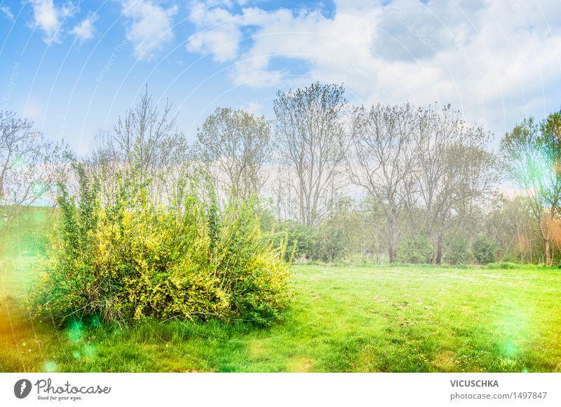 Blühende Forsythie im Garten oder Park Design Natur Pflanze Himmel Sonnenlicht Frühling Schönes Wetter Baum Sträucher Blatt Blüte gelb April Hintergrundbild