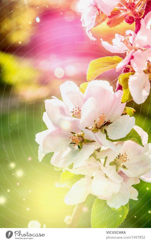 Bunte Natur Hintergrund mit Frühlingsblüten Pflanze grün Sommer Blatt Freude gelb Blüte Garten rosa Design Park Blühend Schönes Wetter Duft