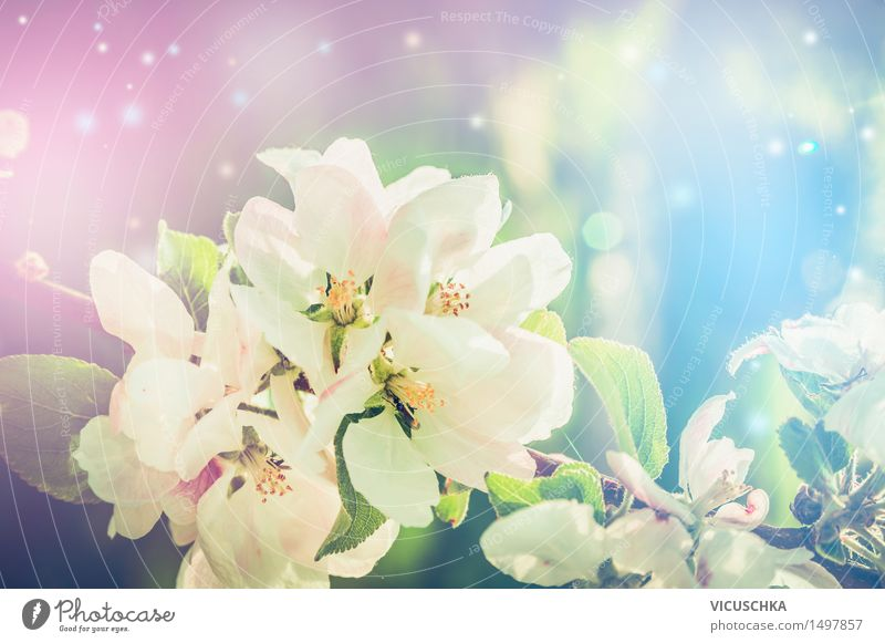 Schöne Natur Hintergrund mit Frühlingsblüte Lifestyle Design Sommer Garten Pflanze Sonnenlicht Schönes Wetter Blatt Blüte Park Blühend rosa Stimmung Freude