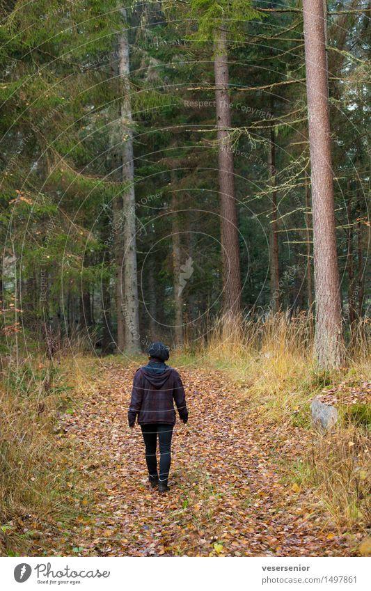 Spaziergang im dunklen Herbstwald Gesundheit feminin Frau Erwachsene 1 Mensch Natur Erde Baum Wald Bewegung Erholung gehen dunkel einfach klein natürlich