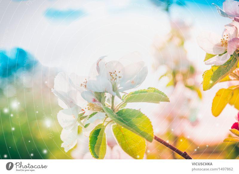 Sonnigen Frühling Baumblüte Design Sommer Garten Natur Pflanze Himmel Sonnenlicht Schönes Wetter Blatt Blüte Park Blühend weich rosa Hintergrundbild