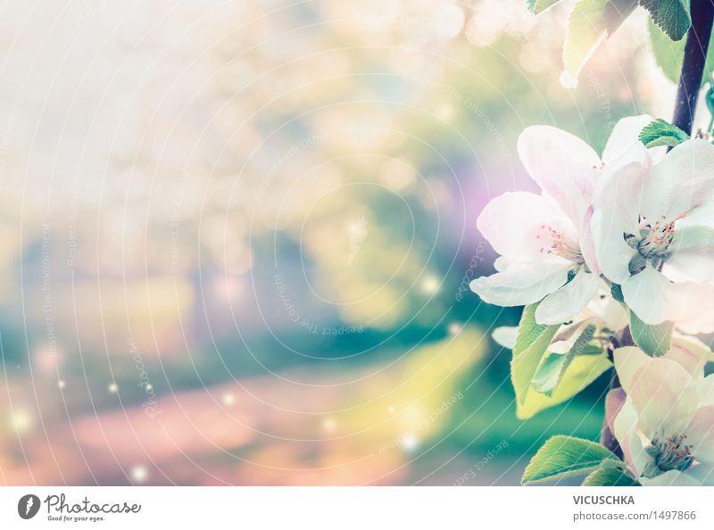 Frühling Hintergrund mit weißen Baum Blüten Natur Pflanze Sommer Blatt Hintergrundbild Garten Stimmung rosa Design Park Blühend Schönes Wetter Blütenknospen