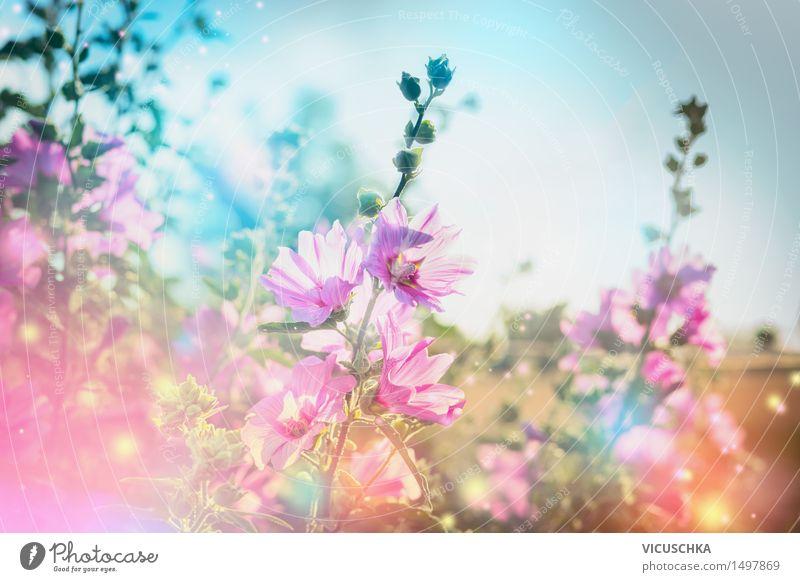 Sommer Blumen Natur Hintergrund mit blühende Malve Lifestyle Design Garten Pflanze Himmel Schönes Wetter Gras Blatt Blüte Park Blühend rosa Duft Hintergrundbild