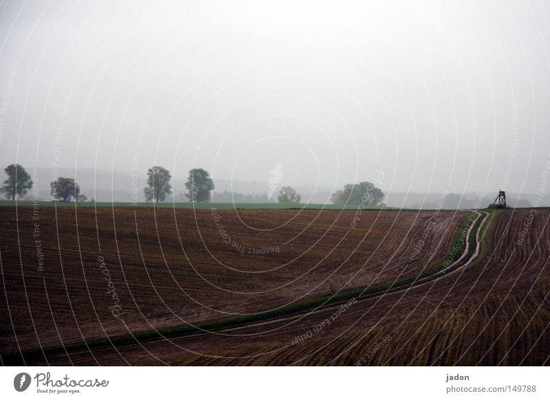 Herbst. Regen. Mistwetter. Gedeckte Farben Außenaufnahme Menschenleer Silhouette Landschaft Himmel Wolkenloser Himmel schlechtes Wetter Nebel Baum Feld Hügel