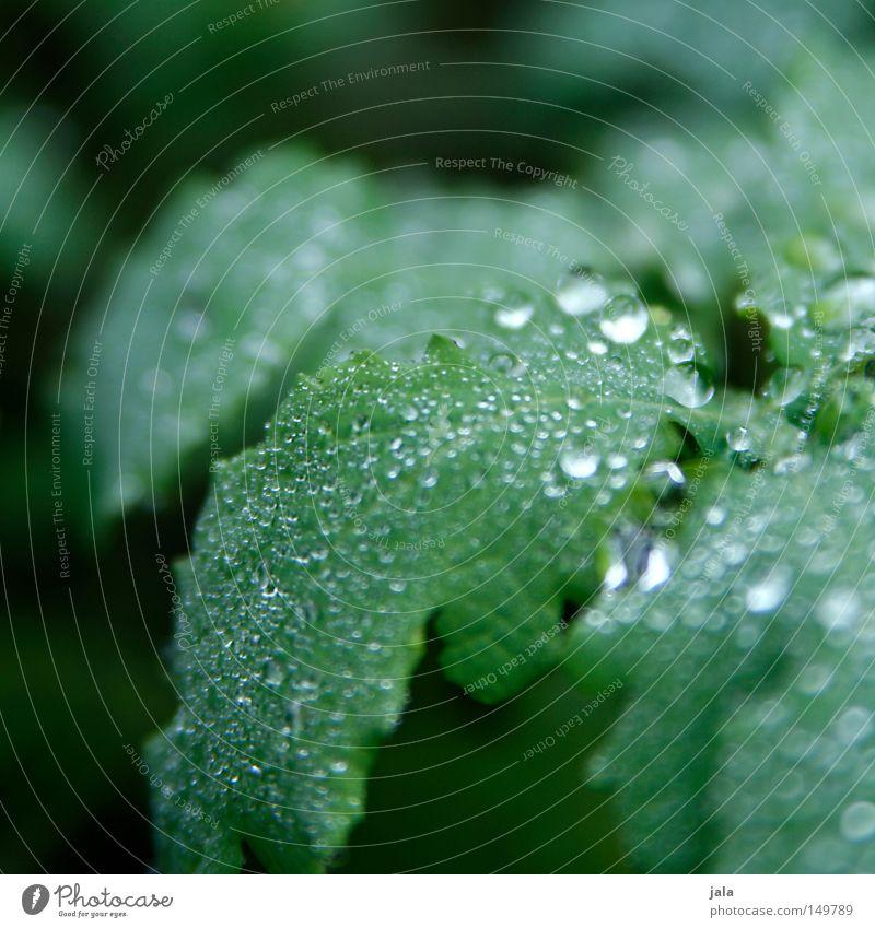 glitzerwald II Pflanze schön Wasser Blatt Leben Herbst Regen glänzend Wassertropfen nass Romantik Tropfen harmonisch Gewitter feucht Durst