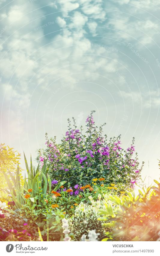 Sommer Garden mit Blumenbett Design Garten Dekoration & Verzierung Natur Pflanze Himmel Sonnenlicht Frühling Herbst Schönes Wetter Gras Sträucher Blatt Blüte