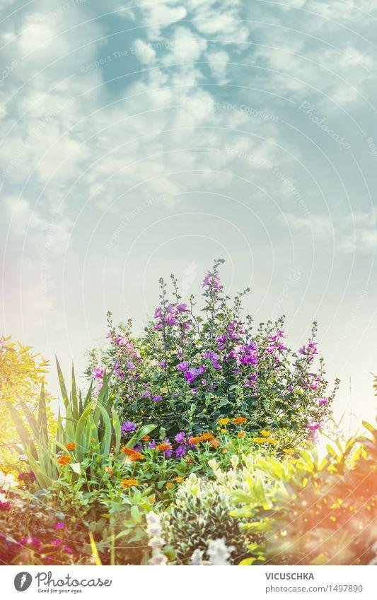 Sommer Garden mit Blumenbett Himmel Natur Pflanze schön Blatt gelb Blüte Herbst Frühling Gras Garten Design Park Wachstum