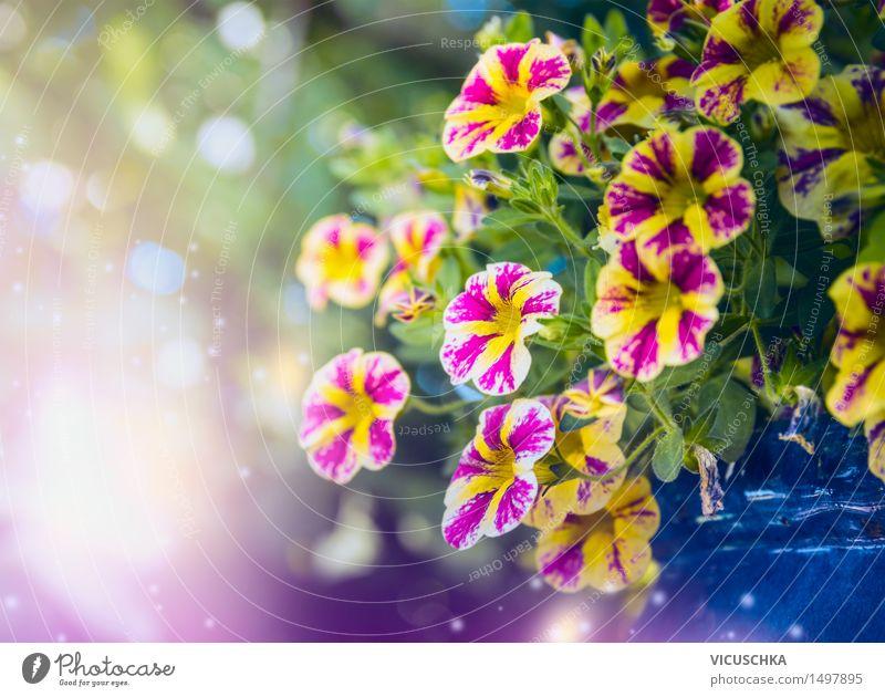 Schöne Petunien Blumen im Garten Lifestyle Stil Design Sommer Natur Pflanze Sonnenlicht Frühling Schönes Wetter Blüte Park Dekoration & Verzierung Blumenstrauß