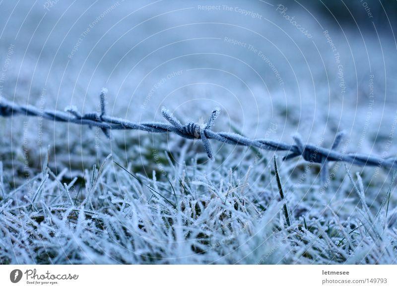 Frozen Wire weiß Winter Schnee Gras Angst Frost Draht Justizvollzugsanstalt Stacheldraht Bergwiese Weidezaun