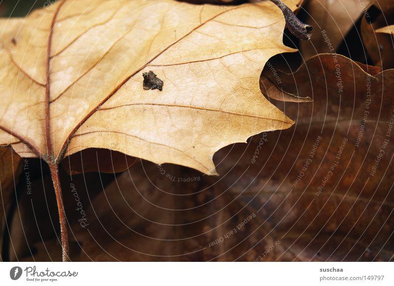 rest(ur)laub Blatt kalt Herbst nass schlafen Vergänglichkeit Müdigkeit Jahreszeiten frieren Gefäße