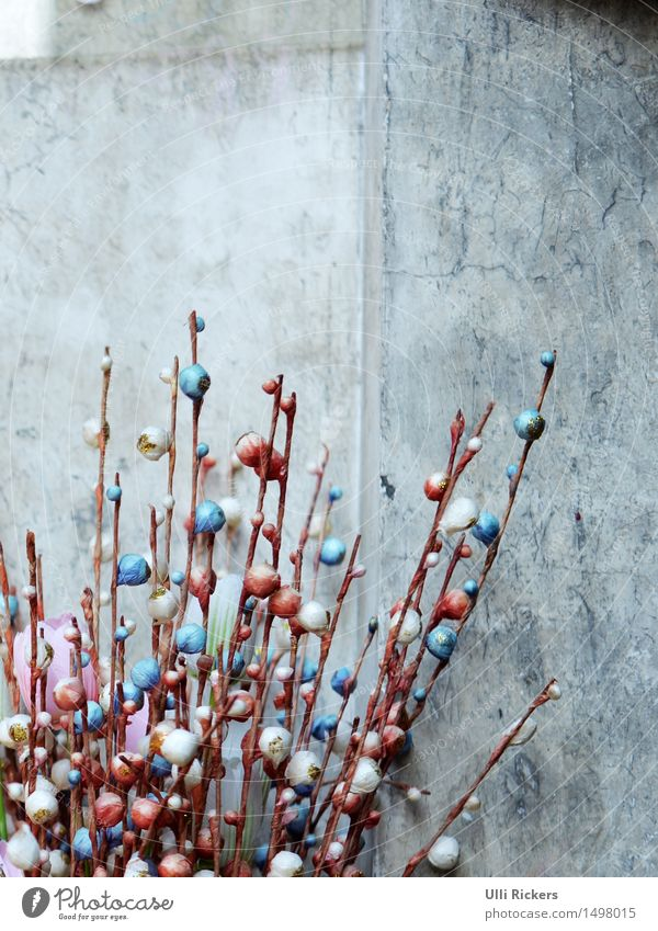 oooOoOooOoOooo Pflanze Blume Wand Mauer Stein Beton Vergänglichkeit Asien China Topfpflanze