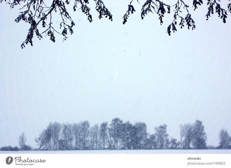 Es schneit! Himmel Baum Winter Blatt Wolken kalt Schnee Ast Zweig Schneeflocke Flocke